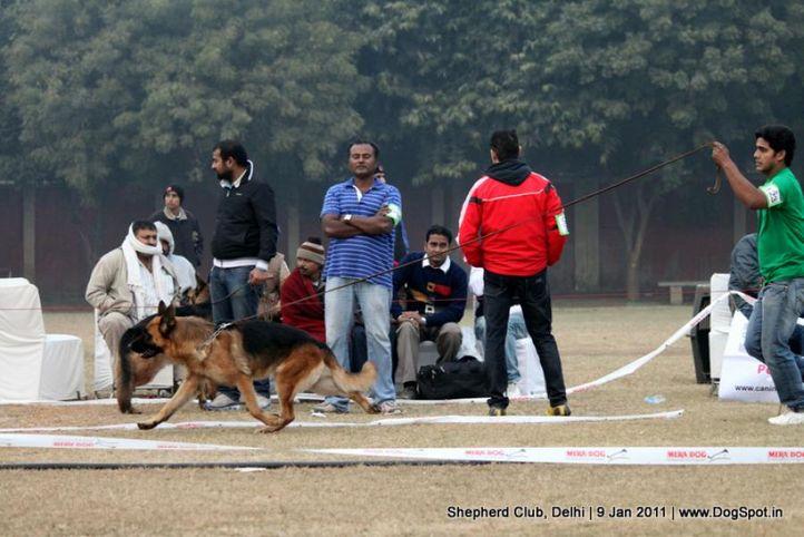ex-123,sw-20,, Shepherd Club Delhi, DogSpot.in