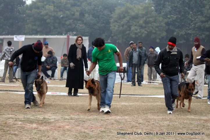 judge,sw-20,, Shepherd Club Delhi, DogSpot.in