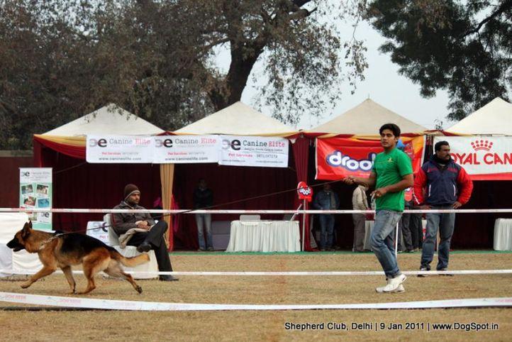 sw-20,, Shepherd Club Delhi, DogSpot.in