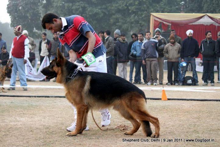 ex-9,sw-20,, REVEL VOM AURELIUS, German shepherd dog, DogSpot.in