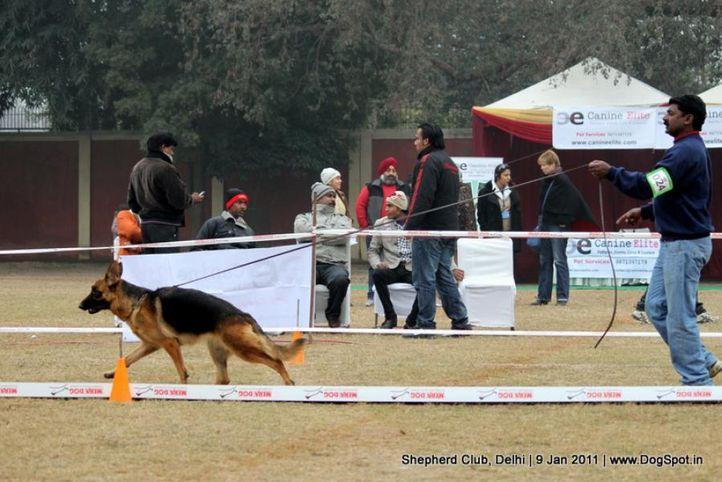 ex-24,sw-20,, SWAPNIL'S FERRY, German shepherd dog, DogSpot.in