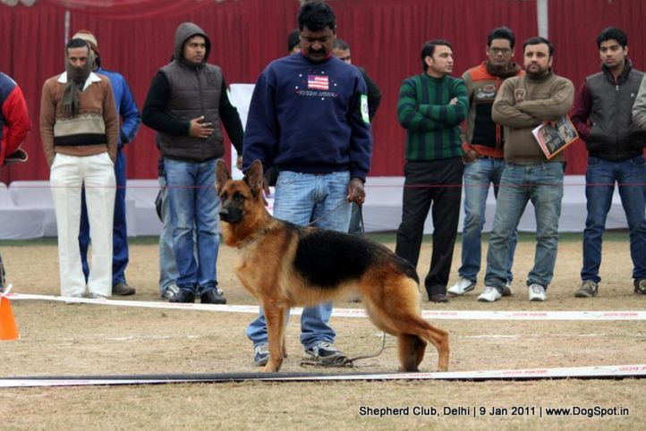 ex-25,sw-20,, SWAPNIL'S EMMY, German shepherd dog, DogSpot.in