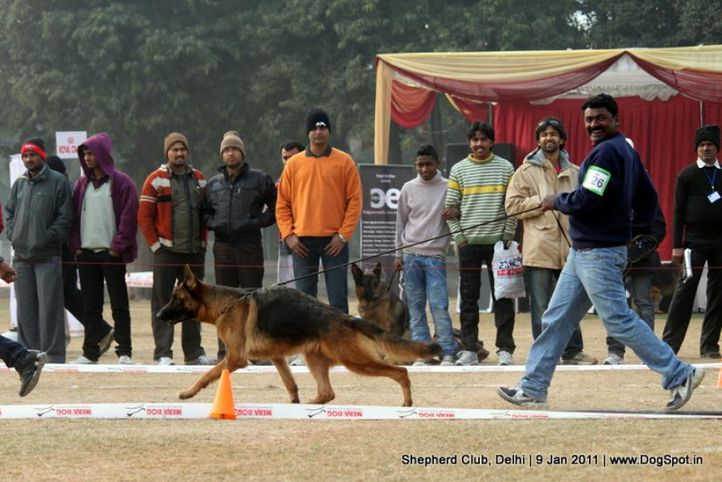 ex-26,sw-20,, SWAPNIL'S SUZY, German shepherd dog, DogSpot.in