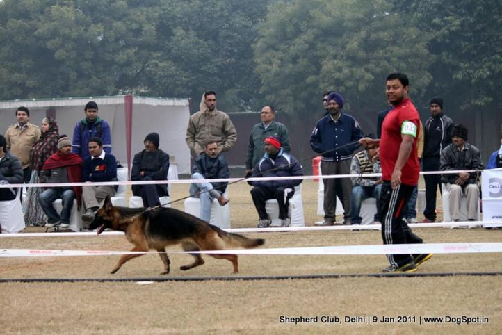ex-33,sw-20,, BLITZ HAUZ VERONA, German shepherd dog, DogSpot.in