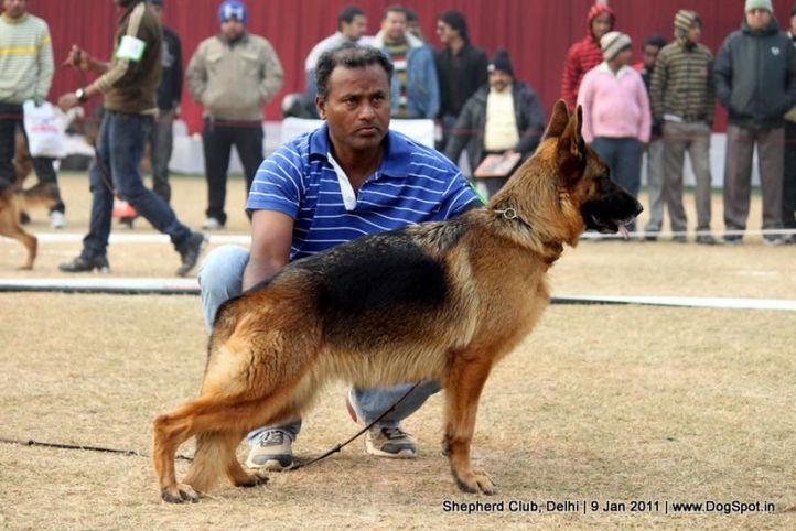 ex-38,sw-20,, LYRA VOM BRACH MARK, German shepherd dog, DogSpot.in