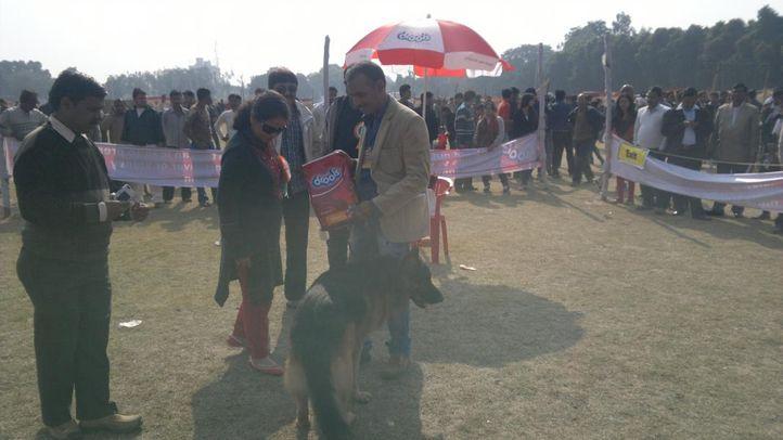 sheru singh lucknow, Sheru Singh lucknow, DogSpot.in