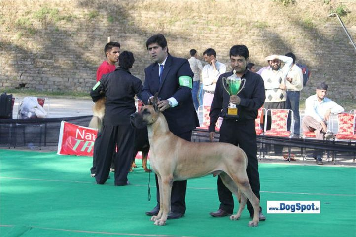 sw-1,ex-104,great dane,lineup,, Shimla 2010, DogSpot.in