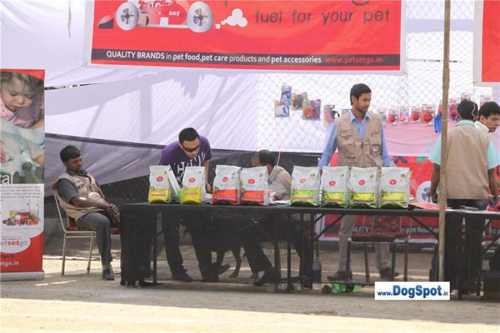 ground,stalls,, Shimla 2010, DogSpot.in