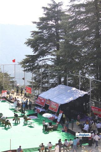 ground,, Shimla 2010, DogSpot.in