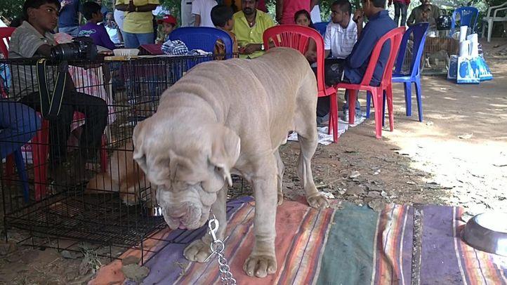 bangalore dog show photos, Sleeping hound, DogSpot.in