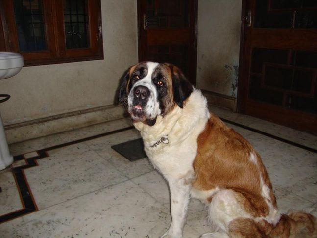 , sony sethi , shahabad (M.) haryana, DogSpot.in