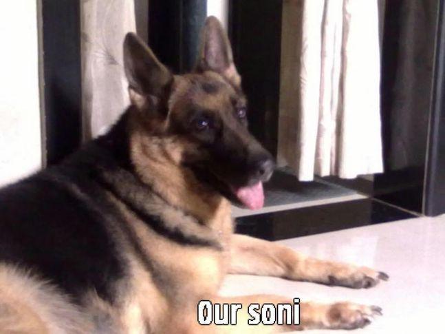 swapnils soni, swapnils soni, DogSpot.in