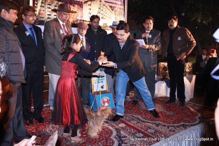 committee,sw-51,, Taj Kennel Club 2012, DogSpot.in