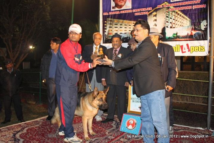 bis,sw-51,, Taj Kennel Club 2012, DogSpot.in