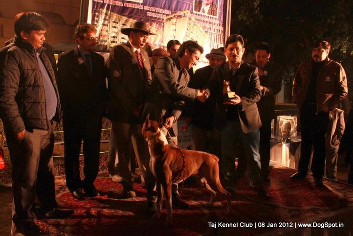 bis,sw-51,, Taj Kennel Club 2012, DogSpot.in