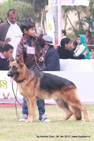 ex-197,gsd,sw-51,, SG1 NANTE VOM ZELLWALDRAND, German Shepherd Dog, DogSpot.in