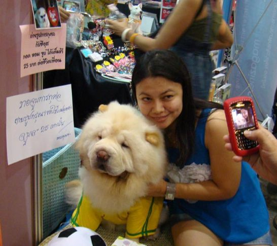 chow chow, Thailand International Dog Show, DogSpot.in
