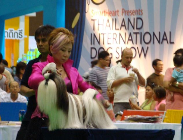 shitzu, Thailand International Dog Show, DogSpot.in