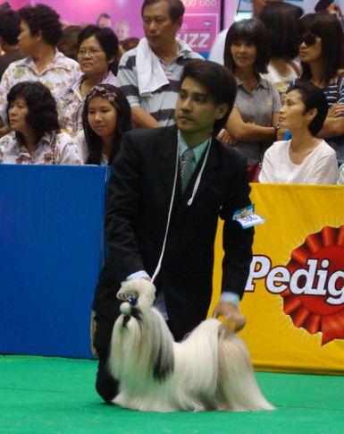 shitzu, Thailand International Dog Show, DogSpot.in