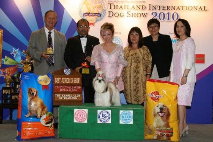 bis,lineup,shitzu,, Thailand International Dog Show, DogSpot.in