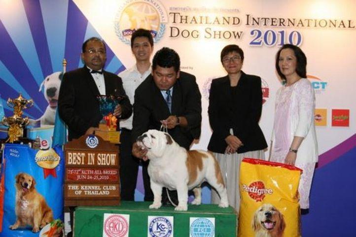 bis,bull dog,lineup,, Thailand International Dog Show, DogSpot.in