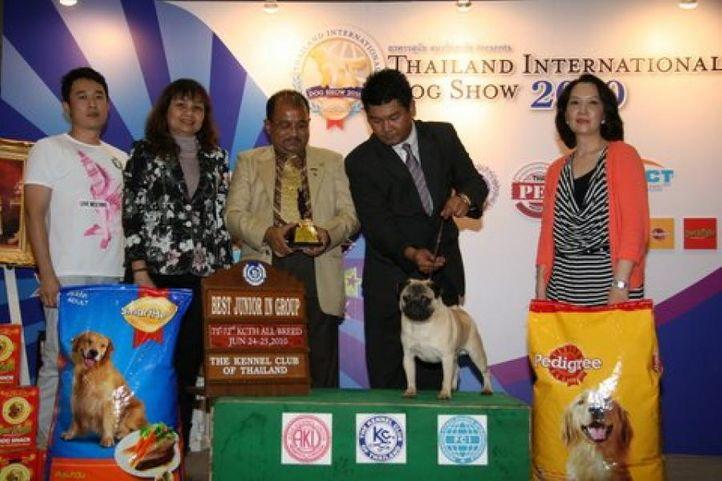 bis,lineup,pug,, Thailand International Dog Show, DogSpot.in
