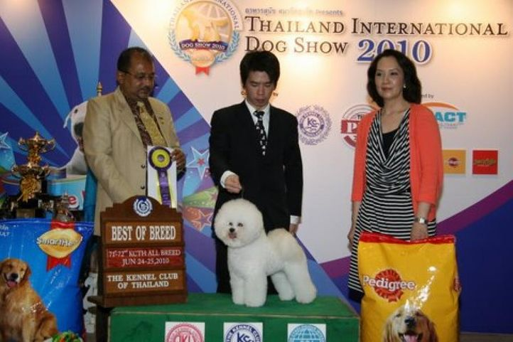 bison,lineup,, Thailand International Dog Show, DogSpot.in
