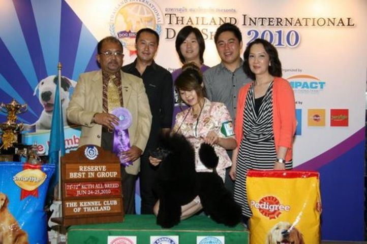 lineup,poodle,, Thailand International Dog Show, DogSpot.in