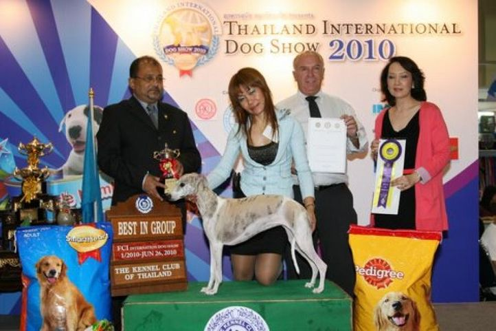 lineup,wippet,, Thailand International Dog Show, DogSpot.in