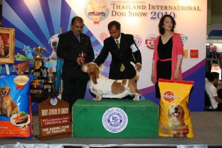 basset,lineup,, Thailand International Dog Show, DogSpot.in