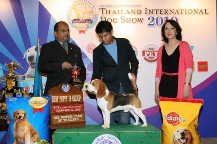 beagle,lineup,, Thailand International Dog Show, DogSpot.in