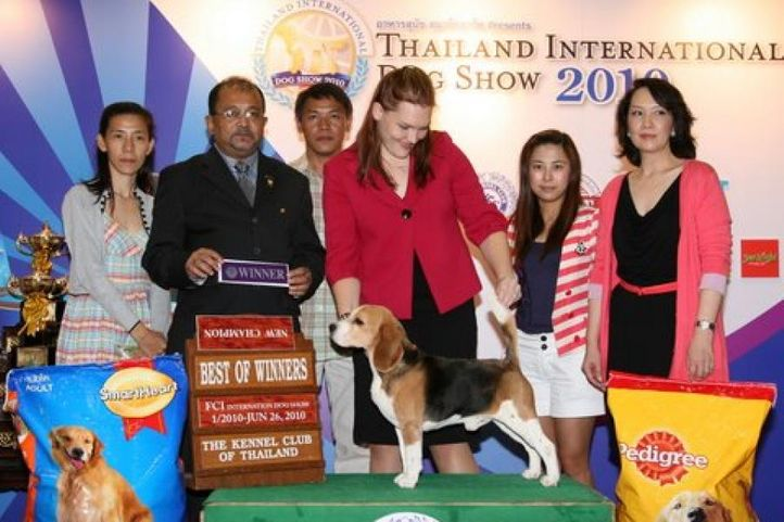 beagle,lineup,, Thailand International Dog Show, DogSpot.in