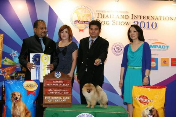 lineup,pomeranian,, Thailand International Dog Show, DogSpot.in