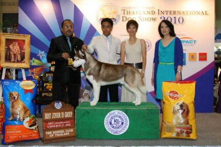 lineup,siberian huskie,, Thailand International Dog Show, DogSpot.in