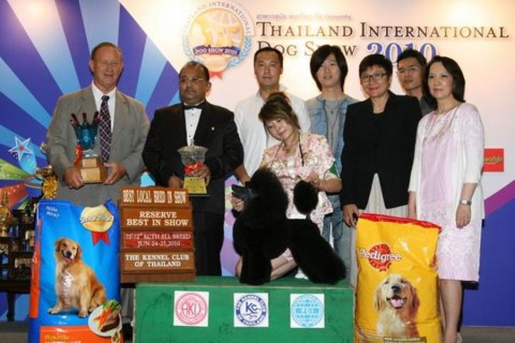bis,lineup,poodle,, Thailand International Dog Show, DogSpot.in