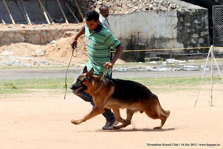 ex-257,german shepherd,sw-59,, CH SWAPNILS JACK, German Shepherd Dog, DogSpot.in