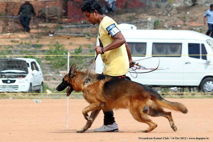 ex-294,german shepherd,sw-59,, ZASKO FEETBACK, German Shepherd Dog, DogSpot.in