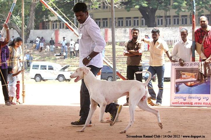 sw-59,rajyapalyam, Trivandrum Dog Show 14th Oct 2012, DogSpot.in