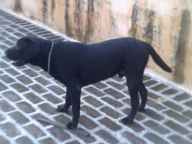 , Tyson Kurukshetra Haryana, DogSpot.in