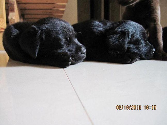 , UQA & HANCY, DogSpot.in