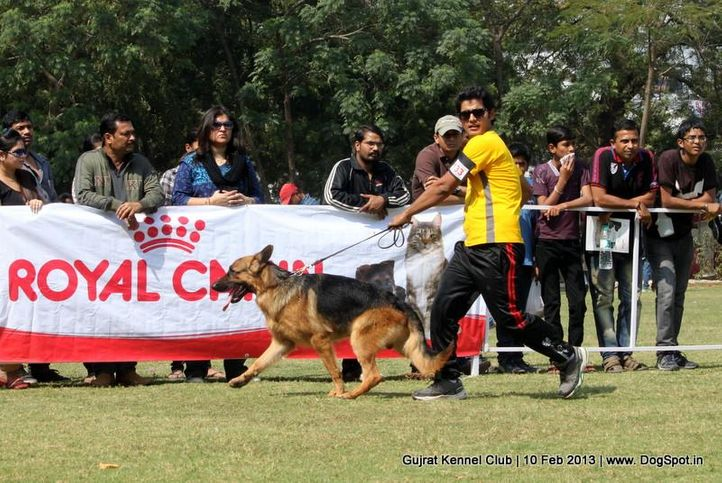 ex-133,german shepherd,sw-83,, Vadodara Dog Show , DogSpot.in