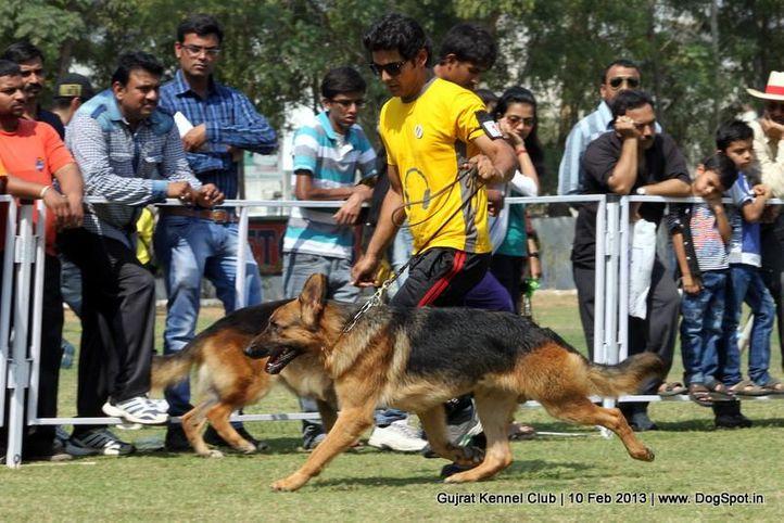 ex-133,german shepherd,sw-83,, Vadodara Dog Show , DogSpot.in