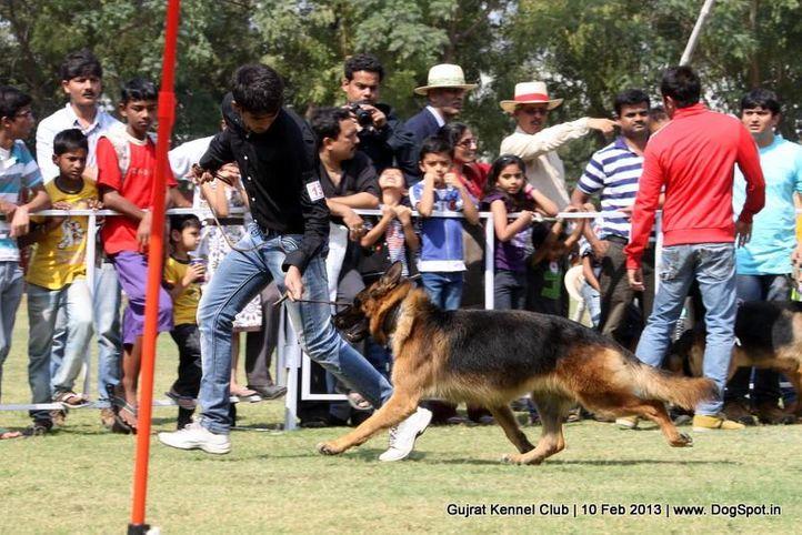 ex-136,german shepherd,sw-83,, Vadodara Dog Show , DogSpot.in