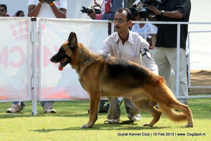 ex-138,german shepherd,sw-83,, Vadodara Dog Show , DogSpot.in