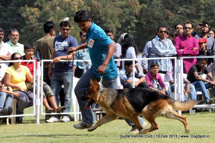 ex-139,german shepherd,sw-83,, Vadodara Dog Show , DogSpot.in