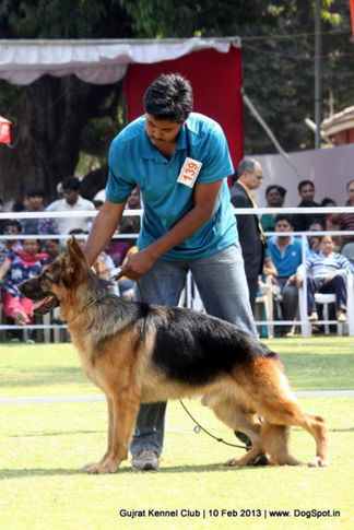 ex-139,german shepherd,sw-83,, Vadodara Dog Show , DogSpot.in