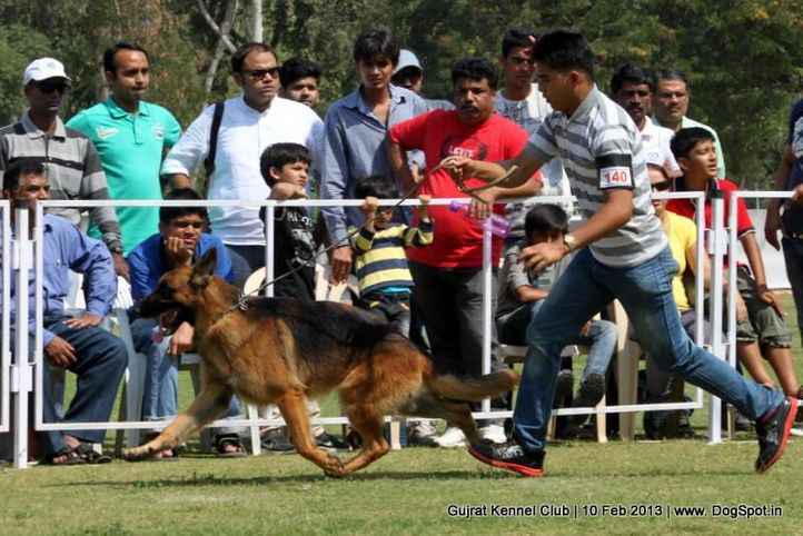 ex-140,german shepherd,sw-83,, Vadodara Dog Show , DogSpot.in