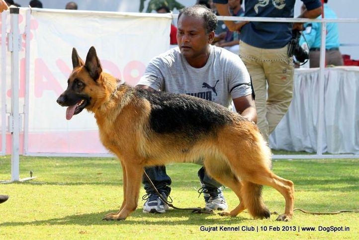 ex-141,german shepherd,sw-83,, Vadodara Dog Show , DogSpot.in