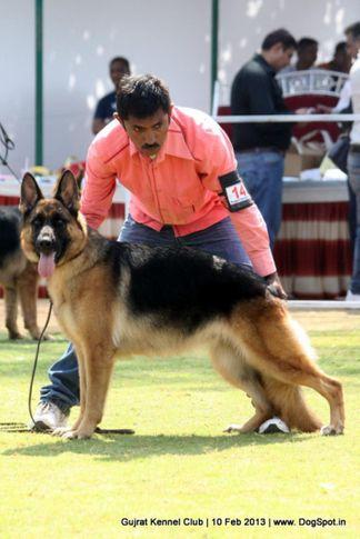 ex-142,ex-147,german shepherd,sw-83,, Vadodara Dog Show , DogSpot.in