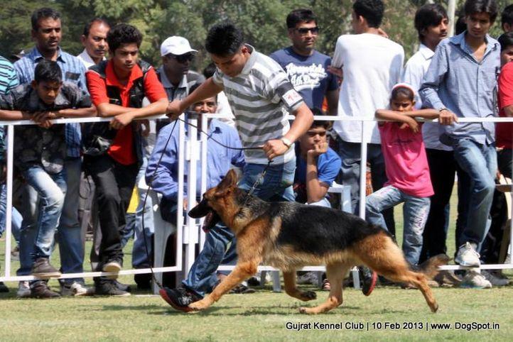 ex-142,german shepherd,sw-83,, Vadodara Dog Show , DogSpot.in